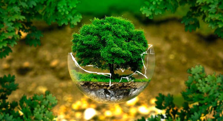 Illustration of a tree inside a broken glass ball